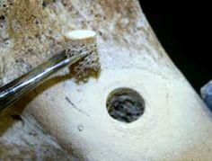 DNA's half-life identified using fossil bones