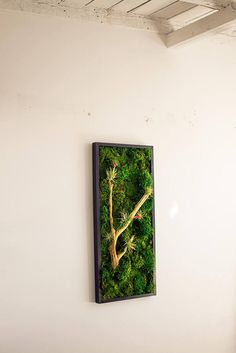 This vibrant moss art lightens and brightens up any room! What a beautiful focal piece. Best of all, the 100% naturally preserved moss looks and feels alive, but it requires NO CARE at all! Have the looks of a vertical garden with out any maintenance; just hang and enjoy! Find this piece and many others, or create your own custom moss artwork at www.KelleyandCricket.com/mossart.com Moss Wall Art, Moss Plant, Forever Green, Plant Design, Live Plants, Crafty Projects, Preserves, Bonsai, Zen