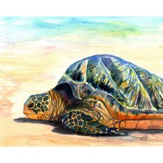 Hawaiian Honu Painting ($26) ❤ liked on Polyvore featuring home, home decor, wall art, sea turtle, turtle, white paintings, sun wall art, beach scene wall art, beach home decor and sun painting