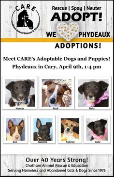 Lots of adoptable dogs and puppies will be ready to meet you today  at Phydeaux in Cary from 1-4pm!