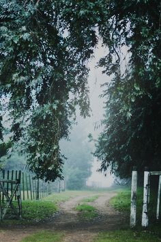 Misty Morning | byJavierAndrés