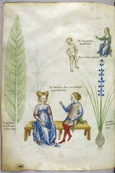 Tractatus de Herbis (ca.1440) miniature of the plant hyppurius (field horsetail) on the left, with a man and a woman sitting on a bench in the middle labelled 'de homine sive de muliere experimenta' illustratiing the effects of an aphrodisiac, with jacinta on the right, an aid to urinary problems and menstruation with a naked boy and seated woman above the plant