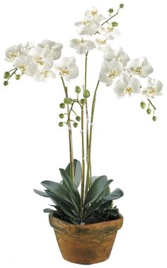 Silk Decor Phalaenopsis Plant, White -- Additional details at the pin image, click it  (This is an amazon affiliate link. I may earn commission from it)