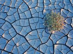 """Фотограф запечатлел захватывающие цветочные пейзажи в центре пустыни  Американский фотограф Ги Таль создал цикл фотографий под названием The Good Badlands, что в переводе означает """"Благо бесплодных земель"""". Эти ландшафтные снимки отражают мимолётную красоту выжженной пустыни."""