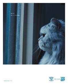 雑誌・新聞広告 | YKK AP株式会社