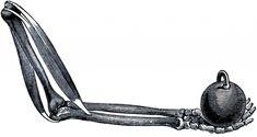 Halloween Skeleton Arm