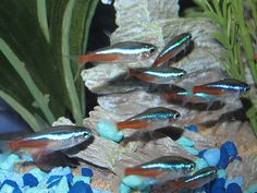 10 Best Freshwater Fish For Beginners