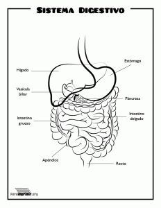 TOUCH this image: Mouth, Esophagus, Stomach, Liver