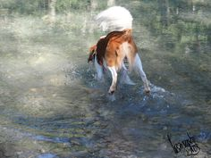 Kooikerhondje im Wasserflug ;-) Horses, Painting, Animals, Art, Ghosts, Nice Asses, Art Background, Animales, Animaux