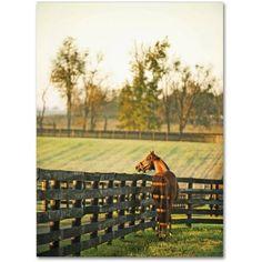 Trademark Fine Art Kentucky Horse Sunrise Canvas Art by Preston, Size: 35 x 47, Multicolor