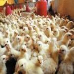 المصرية للدواجن توافق على بيع مزرعة سقارة 1 بـ4.5 مليون جنيه -  وافق مجلس إدارة شركة المصرية للدواجن على التصرف في بيع مزرعة دواجن سقارة 1 بقيمة 4.55 مليون جنيه. وكان مجلس الإدارة اعتمد القيمة العادلة المقدمة من شركة بروفيشنالز للاستشارات المالية لمزرعة سقارة 1 بنحو 3.77 مليون جنيه. وفي فبراير الماضي وافق مجلس إدارة المصرية للدواجن على بيع مزرعة دواجن سقارة (2) بقيمة 5 ملايين جنيه. يبلغ رأس مال الشركة المصدر والمدفوع 94.6 مليون جنيه مقسما على 47.3 مليون سهم بقيمة اسمية 2 جنيه للسهم الواحد…