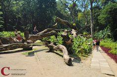 Troncos Parque Lage - Rio de Janeiro - RJ - Brasil