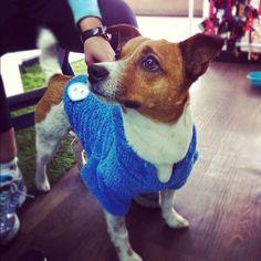 Miren a Freud con su nuevo hoodie cariñosio azul.