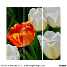 Vibrant White, Red & Yellow Tulips Floral Wall Art Triptych #flowers #art #tulips #white #zazzle #homeDecor #gifts JOIN ALL ABOARD