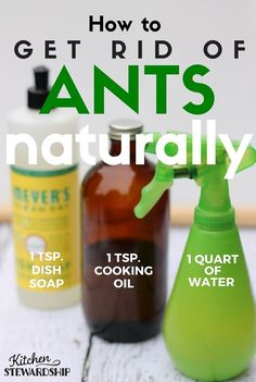 Dish soap + water + oil ant killer for outdoors