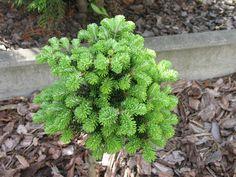 Jodla Veitcha Kramer Oldenburg, Herbs, Plants, Herb, Plant, Planets, Medicinal Plants