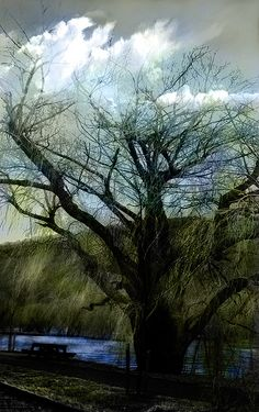 Tree and Cloud. Hand colored Photograph.Nellie Vin