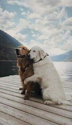 best+friend.jpg (530×917)
