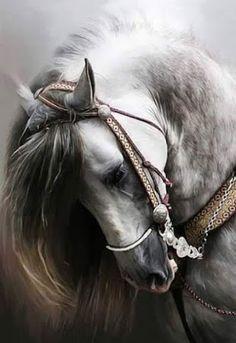 Horses – Społeczność – Google+