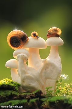Magical Mushrooms    So very magic...............                (KO)... and the snails have come to dine!
