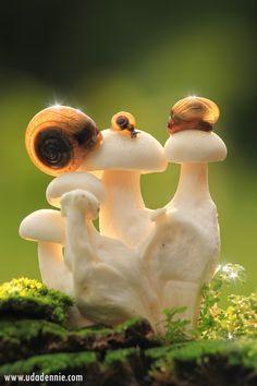 ** Mushroom