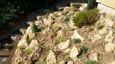Kreakert sziklakert 2014 junius Texture, Garden, Surface Finish, Garten, Gardens, Tuin, Yard, Patterns