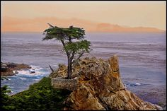 The lone Cypress tree.we love Monterey! One of the first places I visited in California when I was dating my husband! Wonderful memories here.we visit often! Places In California, Monterey California, California Dreamin', Monterey Bay, The Places Youll Go, Places To See, Wonderful Places, Beautiful Places, Carmel By The Sea