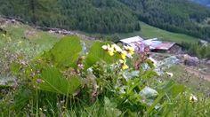 Val Cané, maggio 2014
