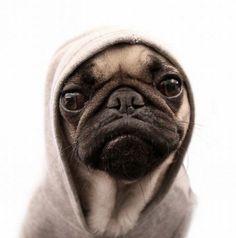 Bone Pugs n Harmony?
