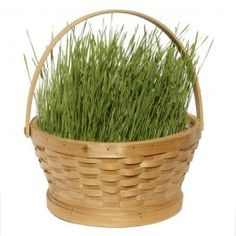Grow Your Own Spring Grass Kit