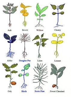 'Tree Seedlings' by John Dilnot (screenprint) Tree Seedlings, Beautiful Paintings, Printmaking, Screen Printing, Instagram Images, Camper Interior, Sky, Interior Ideas, Campers