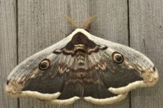 Moth Problems...Nontoxic Ways to Get Rid of Moths in Your House