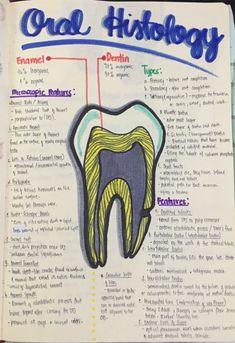 Thirsty Dental Hygienist Mug Dental Assistant Study, Dental Hygiene Student, Dental Hygienist, Dental Life, Dental Health, Dentistry Education, Oral Pathology, Tooth Extraction Healing, Dental Anatomy