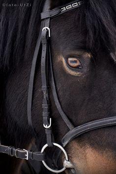 Horse /  UtZi