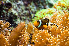 Reef fish arrived in two waves - Technology Org