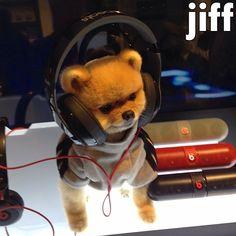 Little idiot! Too cute! Jiff Pom