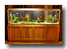Having aquarium fish is perhaps the easiest way to enjoy pets without requiring a whole lot of care.