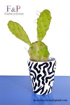 Opuntia Sulphurea o Nopal Cactus Plants, Cacti, Succulents, Cactus