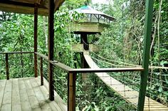 Kampung Rumah Pohon di Hutan Belantara | wisbenbae