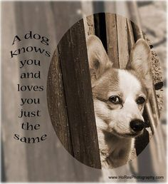 Please like us on FB Greyt Inspirations. The photos are made mainly of the animals of foundation Dj-Imba, home for old, ill and handicapped dogs. With FB Greyt Inspirations we hope to raise awareness for the fate of animals worldwide. The photos are all made by   the founder and care taker Betty Heideman.