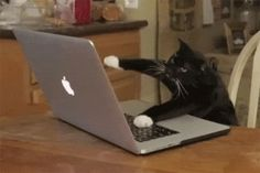The perfect Computer Cat Working Animated GIF for your conversation. Discover and Share the best GIFs on Tenor. Funny Looking Cats, Funny Cats, Funny Jokes, Hilarious, Animals And Pets, Funny Animals, Cute Animals, Baby Animals, Stupid Cat