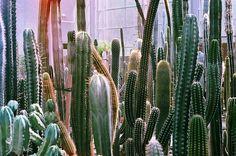 cactus cactus cactus
