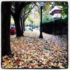 que lindo es el otoño!!!