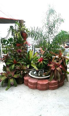 28 Mejores Imagenes De Arreglos Con Bromelias Jardineria