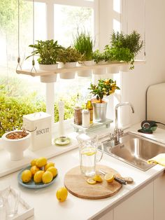 Creative Ways to Add Plants to Even a Tiny Kitchen