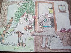 """""""Love Knows No Boundaries...."""" by @Sage_Cat. Its Wind the kittypet and Blossompaw the warrior for @Funtime Foxy!"""