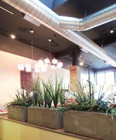 cement planters for exotic vegetation. We remodeled this Thai Restaurant off SW Pine Street in Portland  http://www.bamboo-thai.com/  Ida York Interior Design