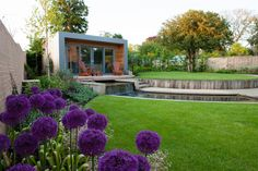Alliums in planting designed by Rose Lennard