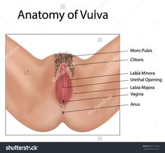 Find Vagina Medical Illustration stock images in HD and millions of other royalty-free stock photos, illustrations and vectors in the Shutterstock collection. Female Reproductive System Anatomy, Medical Anatomy, Vintage Romance, Medical Illustration, Dope Art, Royalty Free Stock Photos, Image, D1, Education