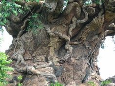 Tree of Life Walt Disney World Florida